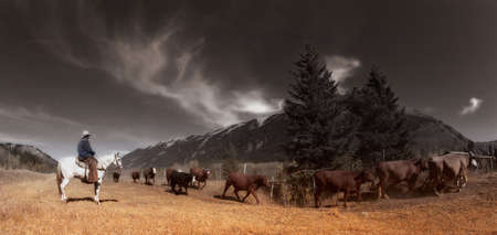 herding: Cowboy On Cattle Drive