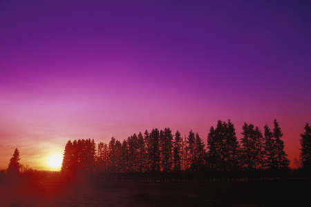 don hammond: Rural sunset behind row of trees
