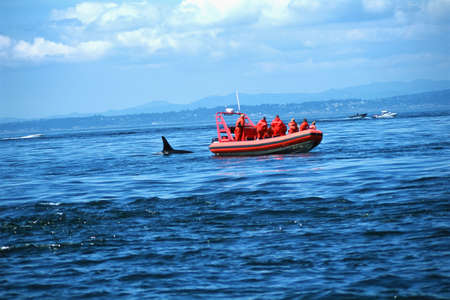 Whale watching tour looking at orca