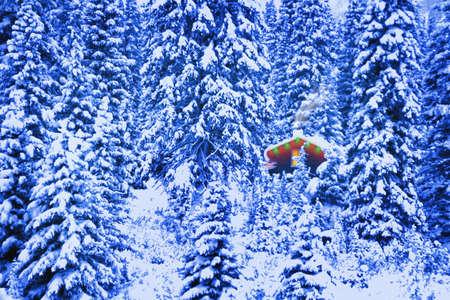 treed: Small cabin on heavily treed hillside in winter