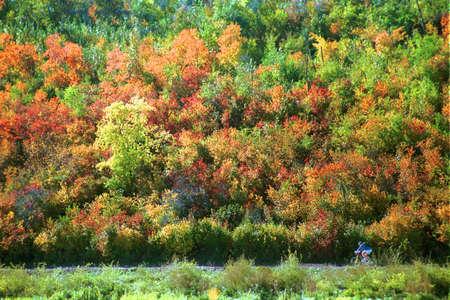 corey hochachka: Man riding bicycle trail in autumn Stock Photo