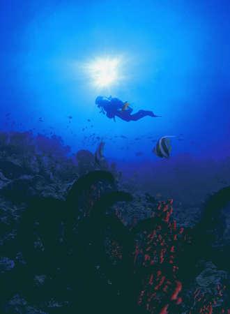 carson ganci: Scuba diver exploring reef