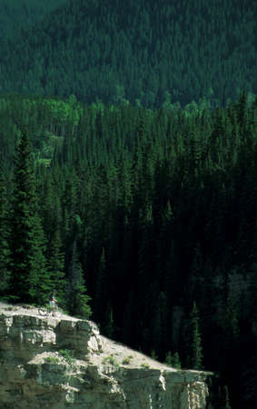 darren greenwood: Cyclist on rocky outcropping with forest in background