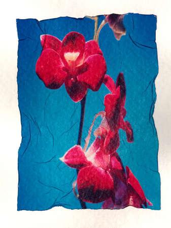 corey hochachka: Flowers on watercolor paper