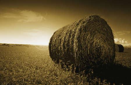 darren greenwood: Bale of hay in field
