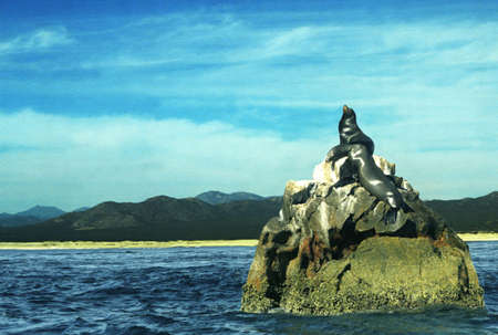 darren greenwood: Seals sunning on rock Stock Photo