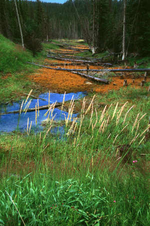 Small creekbed in forest with dead logs photo