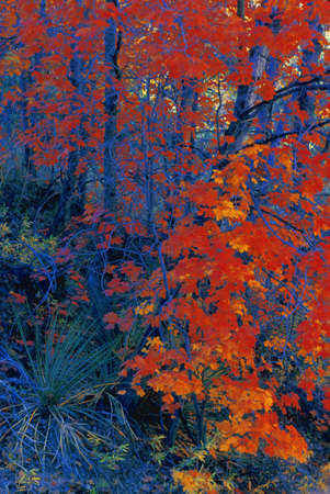 don hammond: Trees in autumn
