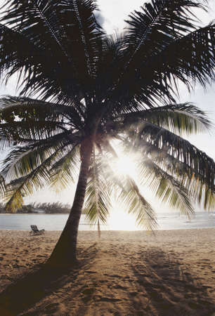 carson ganci: View of ocean and beach through palm tree leafs Stock Photo