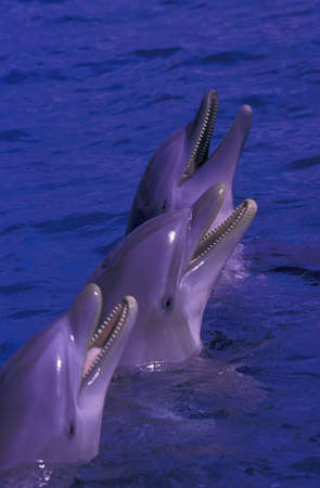 carson ganci: Dolphins standing in water