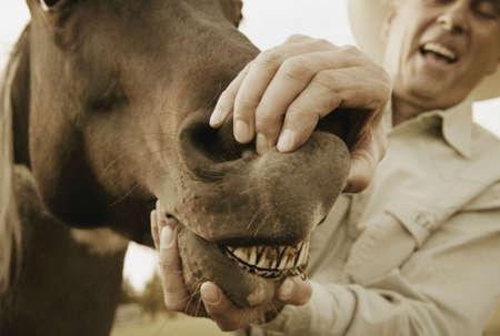 Horse showing teeth photo