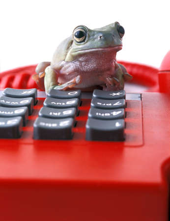 Frog on telephone keypad photo