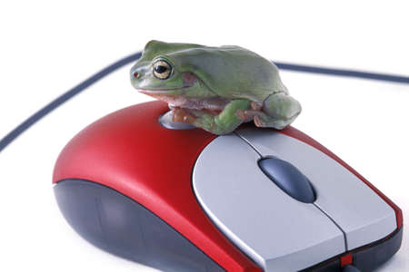 Frog sits on a mouse photo