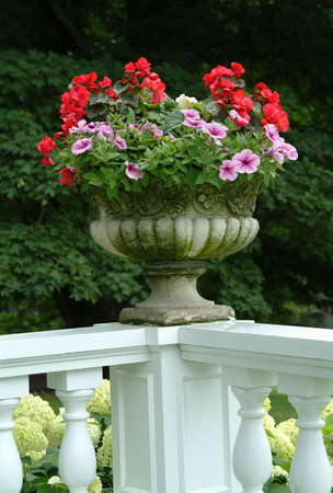 Flowers in a pot on display photo