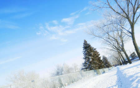 glubish: Trees in winter