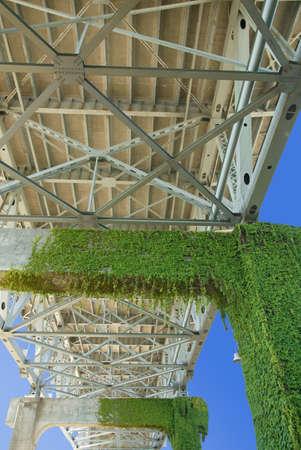 invade: Moss growing underneath a bridge