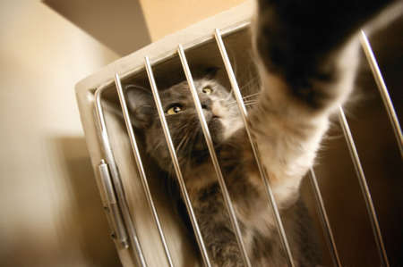 confined: cat reaching through bars