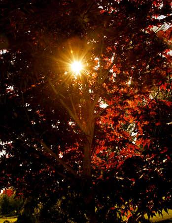 Sun bursting through the leaves photo