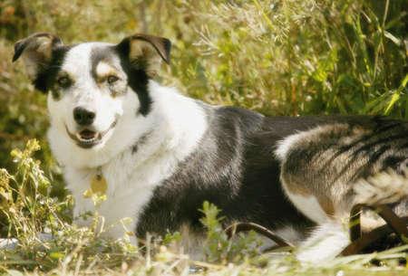 glubish: A dog