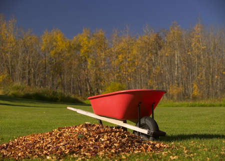 carson ganci: Wheel barrel beside pile of leaves