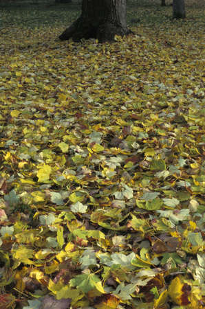Leaves fallen on ground photo