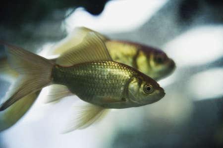 glubish: Two fish underwater