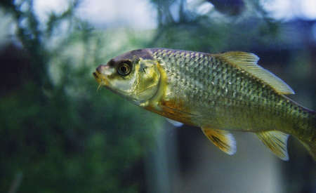 freshwater: Freshwater fish
