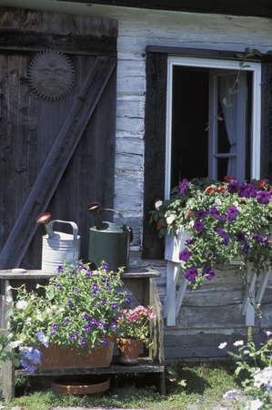 Garden paraphernalia and flowering plants photo