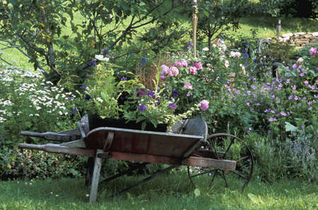 established: Pretty cottage garden
