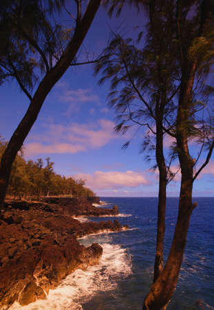 Tropical coastline photo