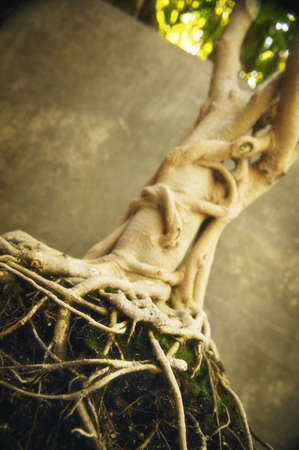 fibrous: Twisted root Stock Photo