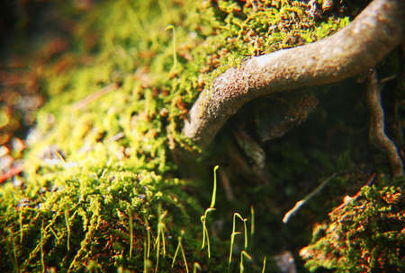 Close up of tree root photo
