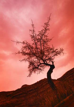 glubish: Silhouette of shrub tree Stock Photo