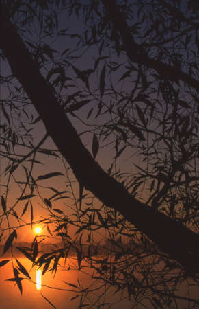 Tree branches silhouetted against a sunset over a lake