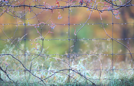 Morning dew on a wire fence