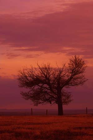 A tree in field Stock Photo