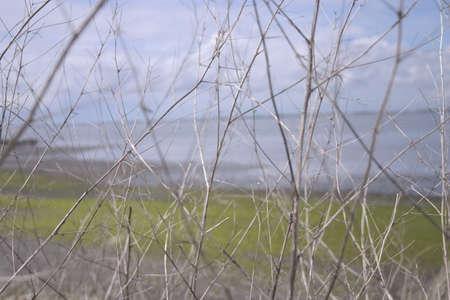해안 옆에 분기의 근접 A 해안 옆에 분기 닫습니다 해안 옆에 분기의 근접 촬영 스톡 콘텐츠