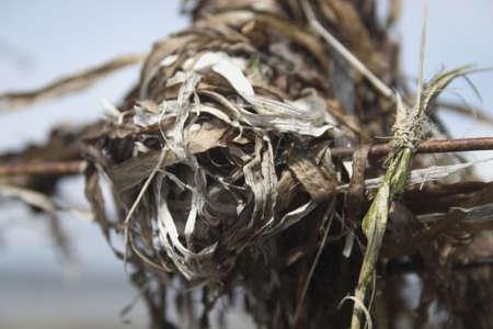 metallic seaweed: A close-up of dried seaweed on a wire   A close up of dried seaweed on a wire   A closeup of dried seaweed on a wire Stock Photo
