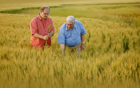 Two men looking at the crop photo