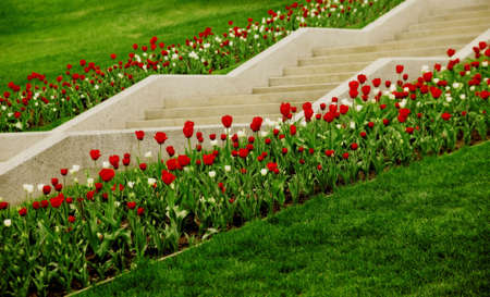 tanasiuk: Staircase lined with flowers