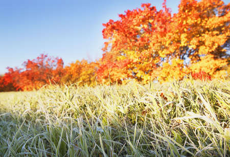 Frosty grass in the autumn Stock Photo