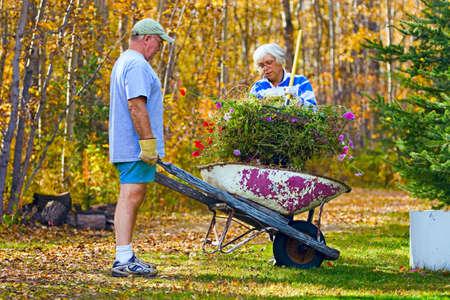 carretilla: Pareja haciendo trabajo de jardiner�a Foto de archivo