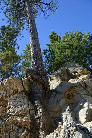 muz: Tree growing in rocks