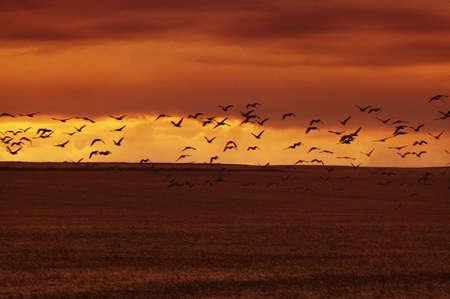 glubish: Birds flying over water
