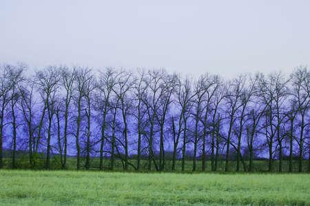muz: Trees in a row Stock Photo