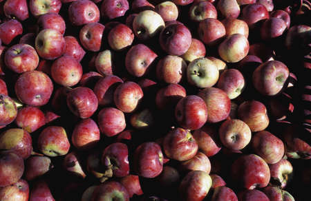 Apples Stock Photo - 6215787