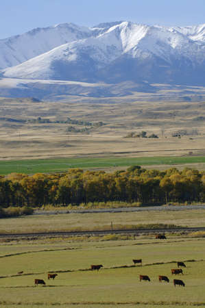 A scenic pasture Stock Photo