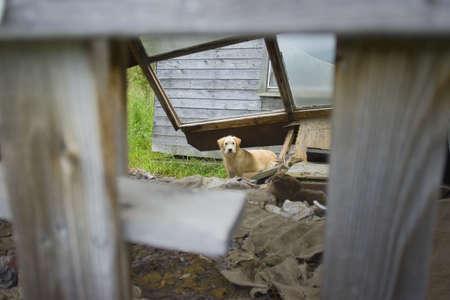 unloved: A dog wandering around