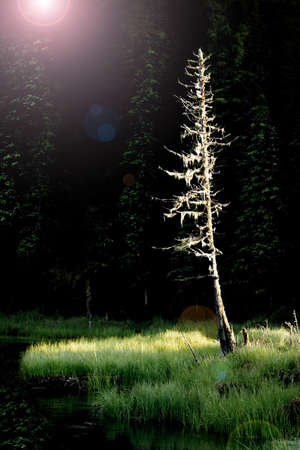 knorr: A dead tree by a pond