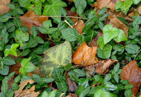 Greenery and dried leaves together Stock Photo